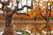 冬春优惠 沿黄四市(州)冬春优惠措施