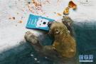 北极熊的生日庆祝会