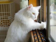 听说这是日本猫才拥有的超能力