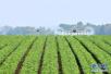 山东力争新增?#25351;?#25913;善灌溉面积200万亩以上