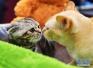 研究:养宠物有益身心 学者:操控生命违道德