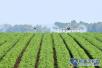 金山银山就是绿水青山 淄博农业转型升级走在前列