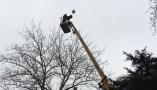 夜鹭遭遇风筝线,被挂树梢超36小时后获解救