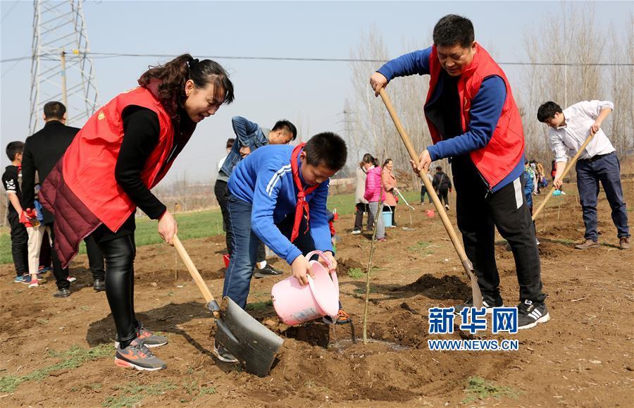 枣庄:栽植绿家园