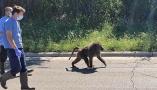 """动物界上演真人版""""越狱"""" 3头狒狒凭超人智慧成功逃生!"""
