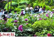 王城公园连片的高山牡丹盛开 待您来赏