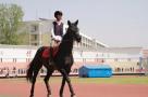骑着马、学做菜、品美酒!山东高校特色专业知多少