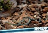 高校寝室跑来一条蛇 结果被男生炖来吃了!