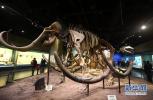 钻透白垩纪:我国率先完成恐龙时代之旅