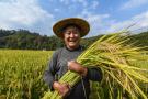 丰收2018|杭州临安:山区生态稻米喜迎丰收