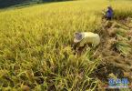 香河:培育特色農業品牌 特色農業助農增收