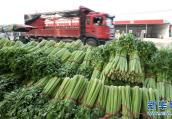 郑州陈砦蔬菜批发市场正式关闭 部分商户将搬入到这里