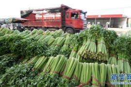 鄭州陳砦蔬菜批發市場正式關閉 部分商戶將搬入到這裡