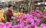 花开飘香迎新春