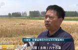 """【夏收进行时】安徽:农机数量快速增加 """"麦客""""转型正当时"""