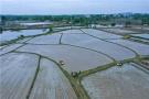 河南光山:谷雨将至早稻插种忙