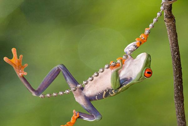 摄影师拍萌宠青蛙蛙中nz#1a青蛙十足-ns#1搜家v#1图片奶奶表情包回图片