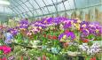 今年花卉市场