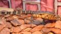 有些宠物宠不得 温州2名年轻人养巨蜥被判刑