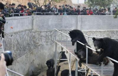青岛野生动物世界虐待狗熊?