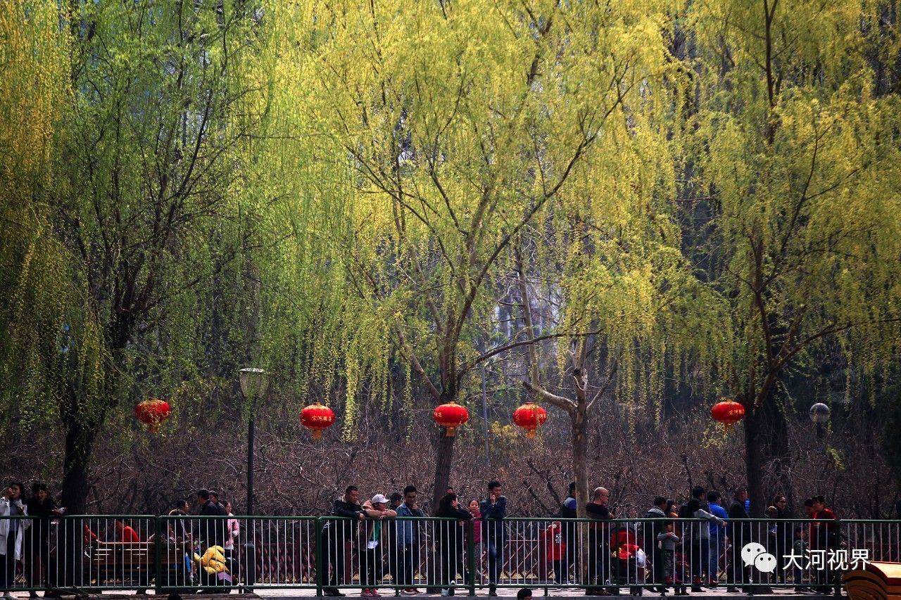 人民公园绿树红灯。