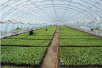 生态农业保险新政策:今年郑州提供10亿元风险保障