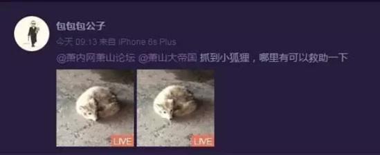 白狐闯入杭州一高中被赶跑 专家:或来自北极
