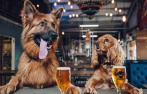 啤酒厂开设狗狗假