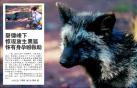 承德磬锤峰下现放生黑狐
