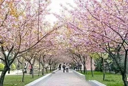 清明节放假安排来啦 想踏青赏花的看过来