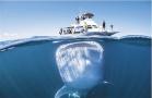 好奇鲸鲨艇下潜伏