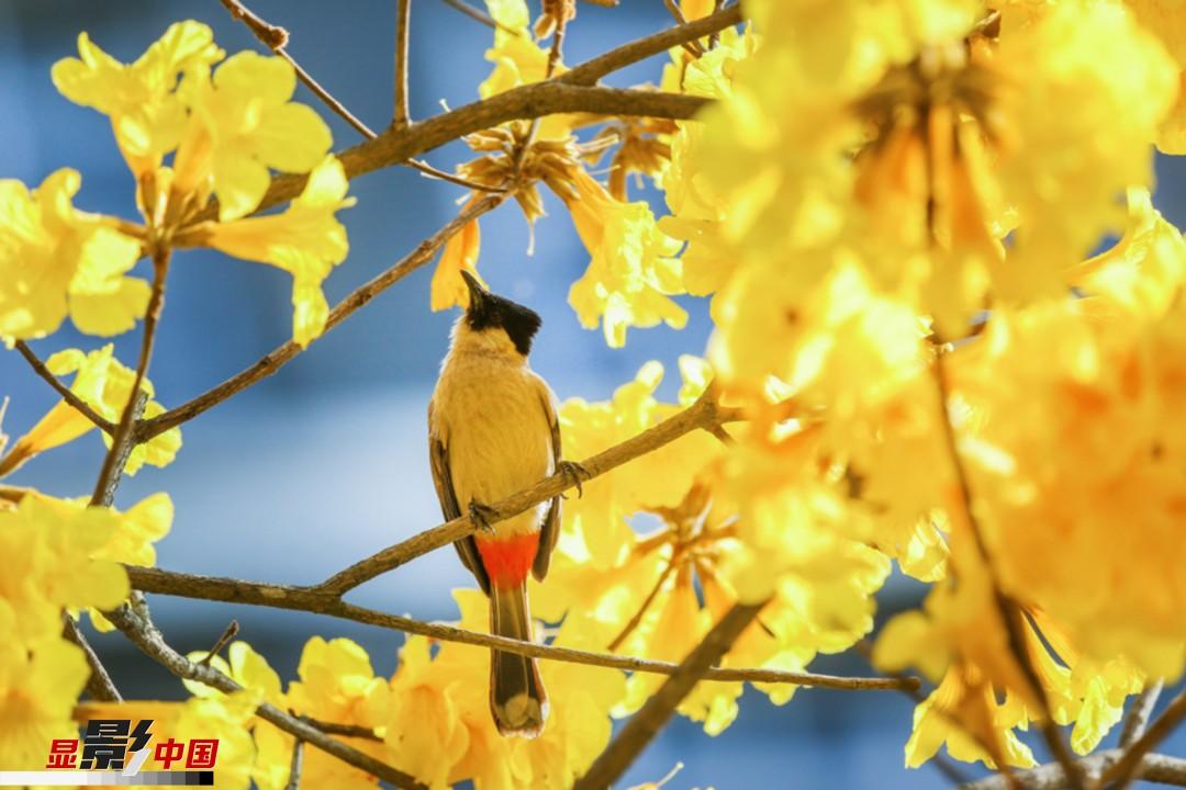 春分特辑:南方的花儿