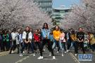 女大学生樱花树下热舞