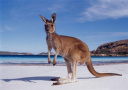 12只澳洲袋鼠空降荣成 又可以愉快地去动物园玩耍啦