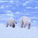"""""""北极摄影第一人"""""""