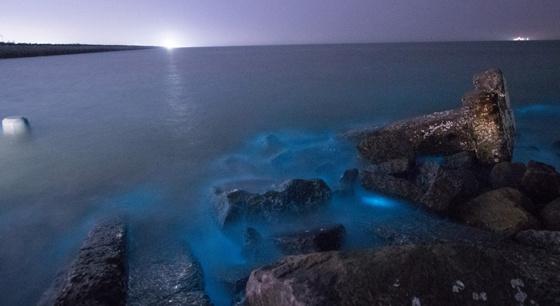 山东沿海现荧光海 梦幻蓝光如同星辰坠入大海