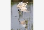 南京首部湿地保护规划出炉 池杉湖等4处将建成省级湿地公园