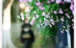 """一个江苏,两个""""季节"""":苏南静等冷空气送清凉"""