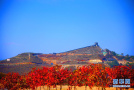 河北涉縣:莊子嶺遍山紅葉迎游客