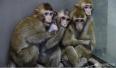 """克隆猴""""中中""""""""华华""""一岁啦!它们现在很健康"""