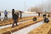 """河南叶县:辣椒产业成为群众增收""""金饽饽"""""""
