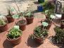 中山植物园开展70多种野菜 野菜好吃但不能乱挖