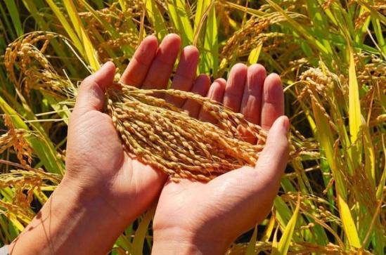 中央一号文件继续聚焦三农:农业也要搞供给侧改革