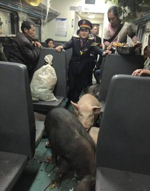 """网曝""""二师兄坐火车回家过年""""真相"""