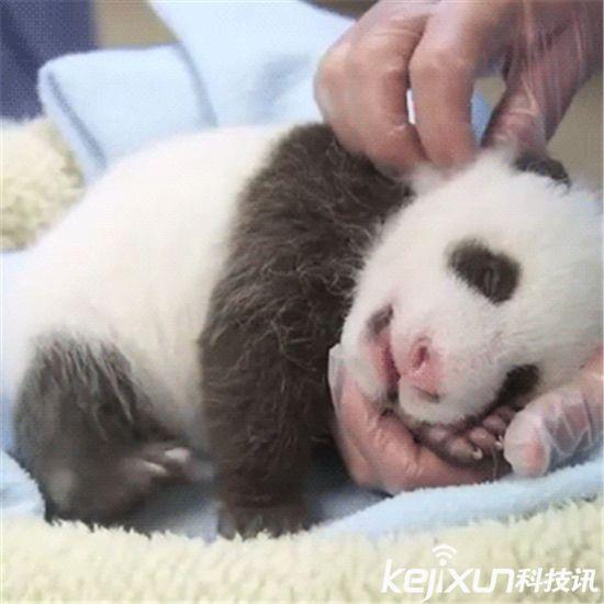 盘点19个濒临灭绝动物宝宝