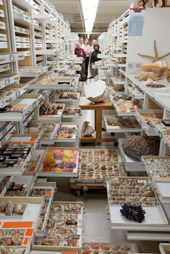 罕见照片披露美国国家自然历史博物馆惊人标本