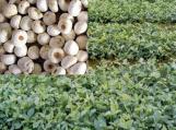 禹州市方岗镇因地制宜发展中药材种植富农家