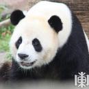 两只大熊猫入住亚布力
