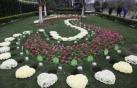 四川鼓励节地生态葬