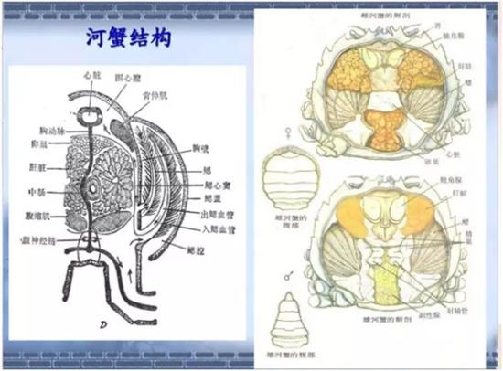浙江台州菜场在官方做v菜场辟谣河蟹注菠萝胶水炖鸭腿图片